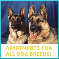 01-Apartments_For_All_Dog_Breeds