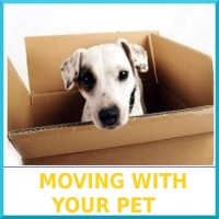 01-Moving_With_Your_Pet