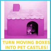 02-Turn_Moving_Boxes_Into_Pet_Castles