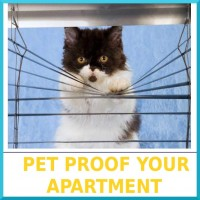 03-Pet_Proof_Your_Apartment